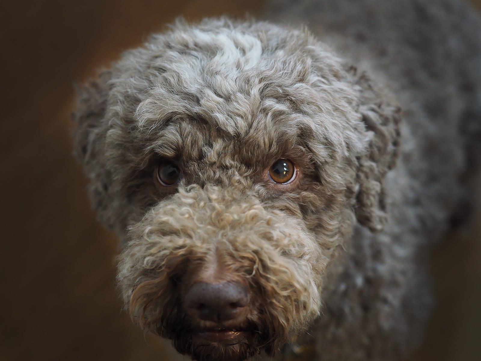 Anett Seidensticker HundeFotografie Hannover