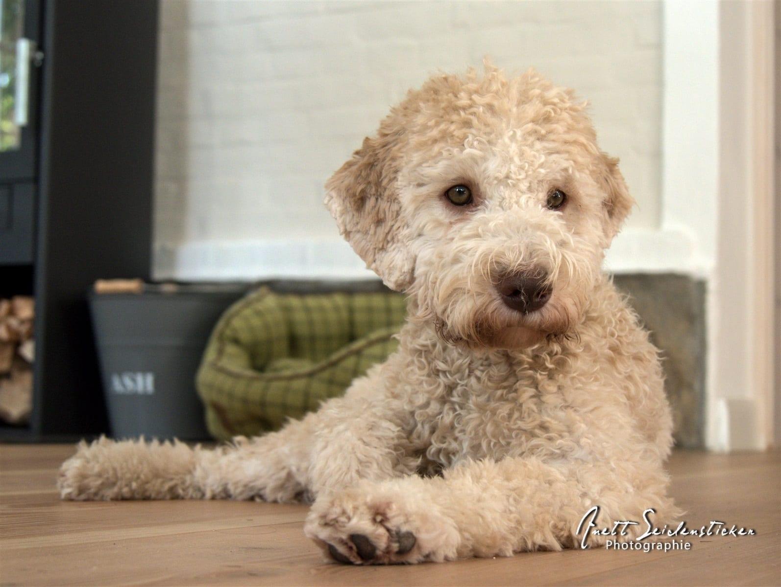 Anett Seidensticker Hundefotografie
