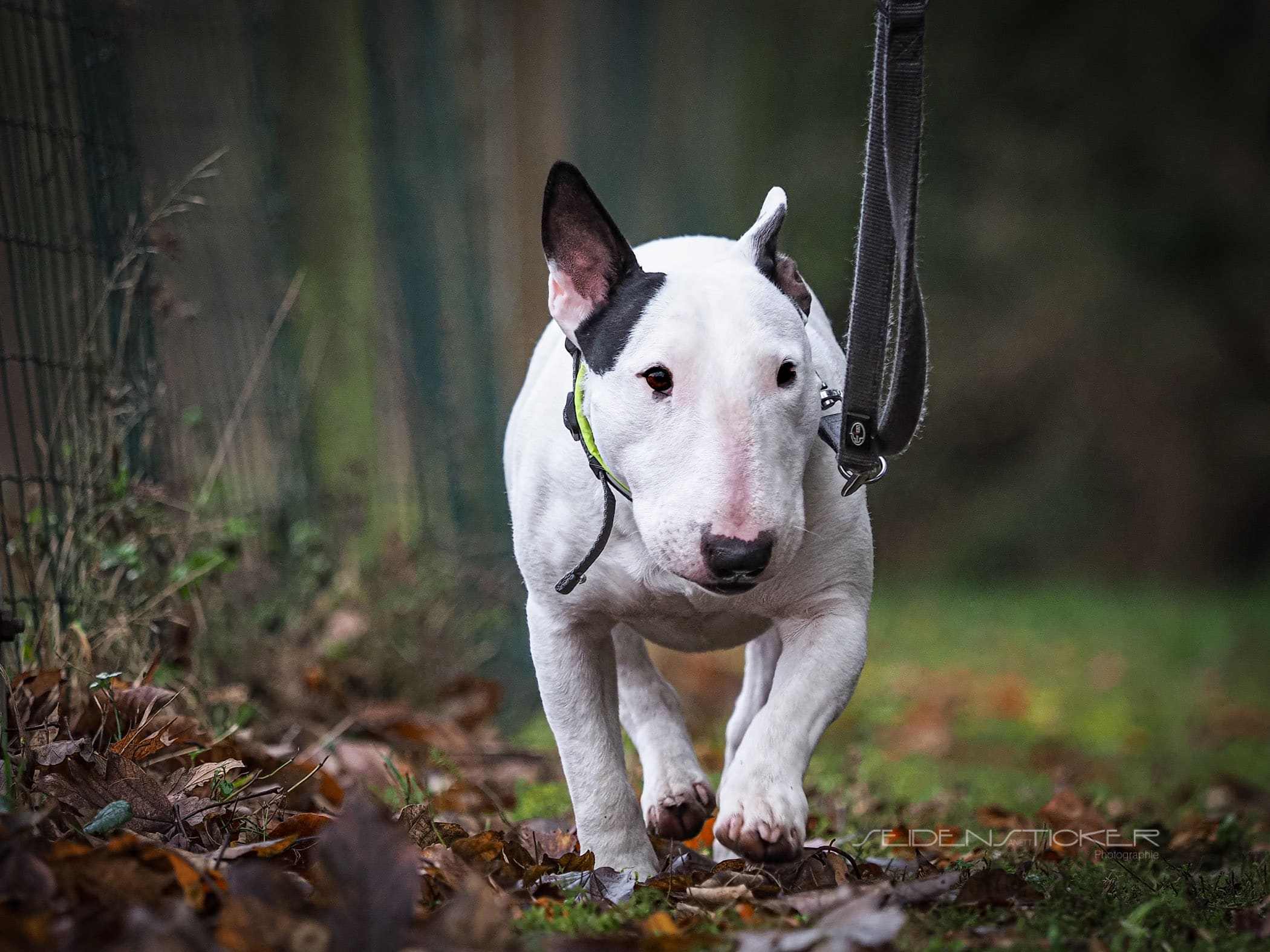 Seidensticker Fotografie - Hundeschule Bruns
